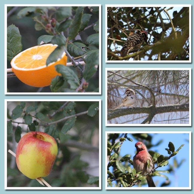 birdsandfood copy