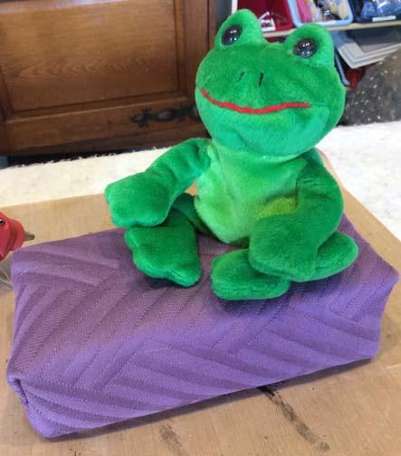 Hola Señor Frog
